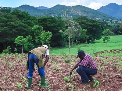 Working in a field