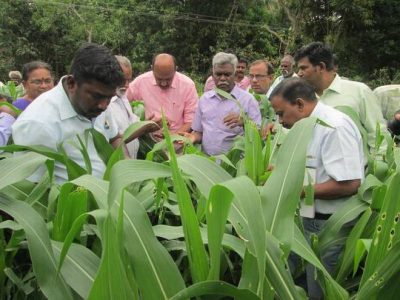 Agricultural Department officials inspecting the damage caused by Fall Army worm, an invasive pest, at Sukkalampatti Kombi village in Tiruchi district on Friday. | Photo Credit: HANDOUT